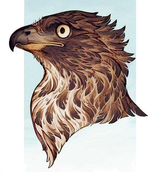 Giulialibard On Instagram Commission For Hawkgoblin Hawk
