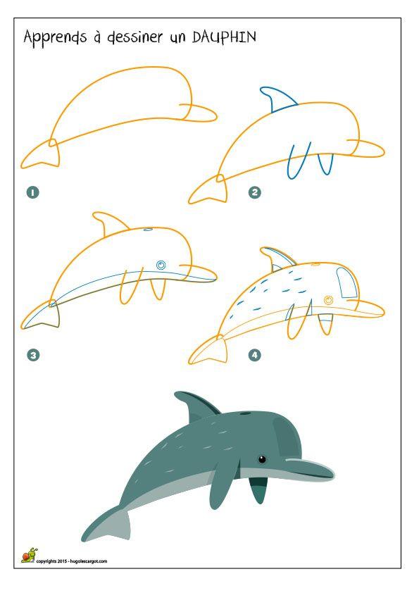 Apprendre à dessiner un dauphin, méthode pour dessiner et colorier un dauphin