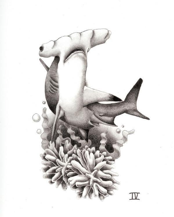 38 best beautiful shark tattoos images on pinterest shark tattoos sharks and gorgeous tattoos. Black Bedroom Furniture Sets. Home Design Ideas