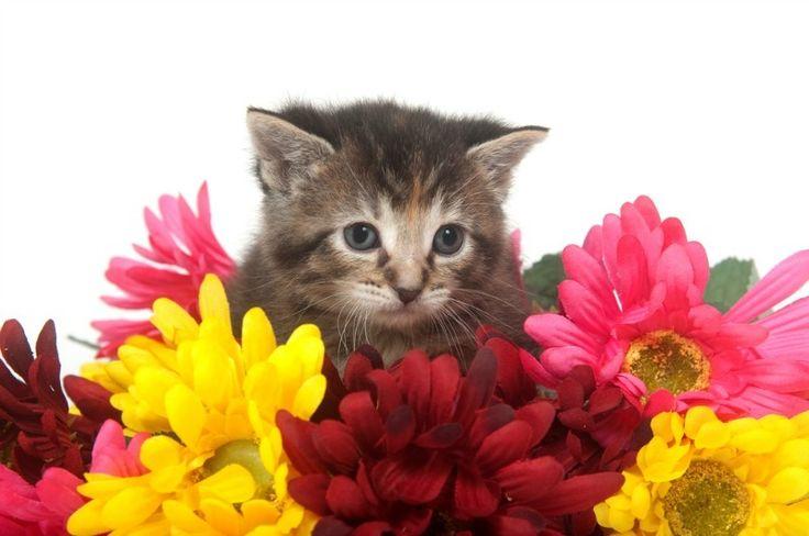 Tuesday's Tip: Deze bloemen zijn levensgevaarlijk voor katten! http://dejlig.nl/deze-bloemen-zijn-levensgevaarlijk-voor-katten/