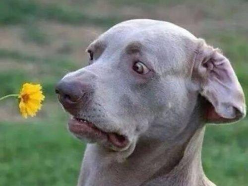 Eeeewwww flower