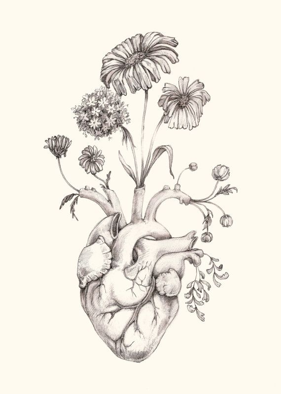 "IMPROVED 5x7"" PRINT of original drawing ""Blooming Heart"" on NEW ivory paper- graphite, art, anatomy, floral, heart, valentine"