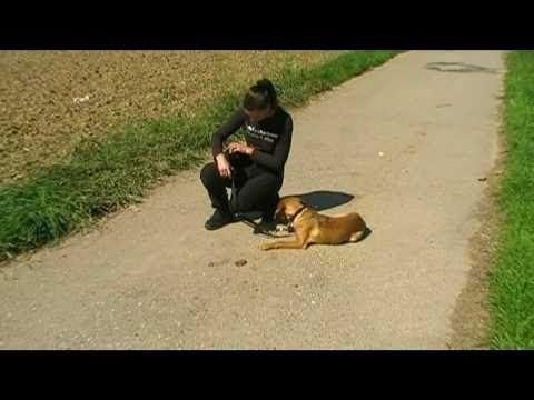 ▶ unbedingt anschauen Mein Hund, der Allesfresser ! (Hundeerziehung, Hundeschule, Training, Hunde) - YouTube