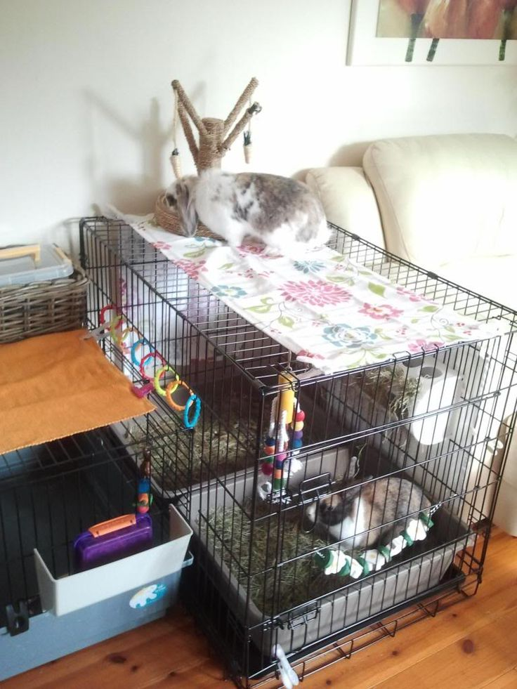 8 best rabbits images on pinterest bunnies rabbit and for Build indoor rabbit cage