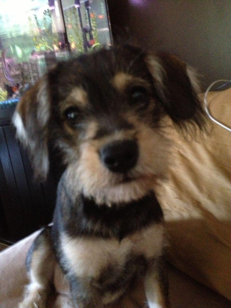 Ruby Our Chizer Jen Pinterest Dog