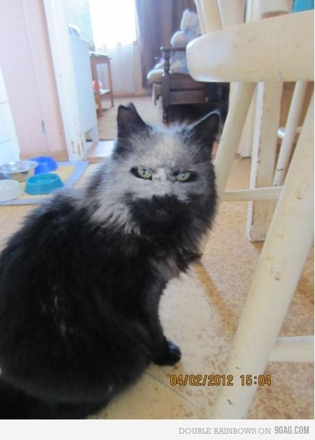 BWAHAHA!! q gato estranho rsrs
