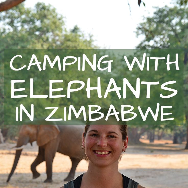 Camping with Elephants in Zimbabwe Africa. By Beth, a blogger at GreatZimbabweGuide.com