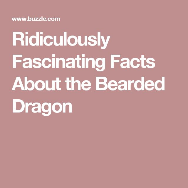 Ridiculously Fascinating Facts About the Bearded Dragon