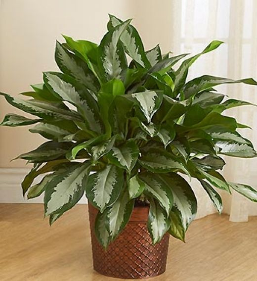 194 best indoor plants care images on pinterest indoor for Indoor house plants easy care
