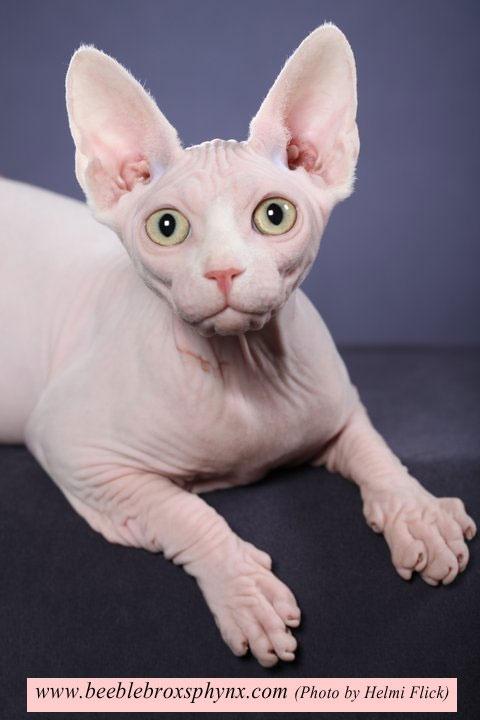 make a grumpy cat meme