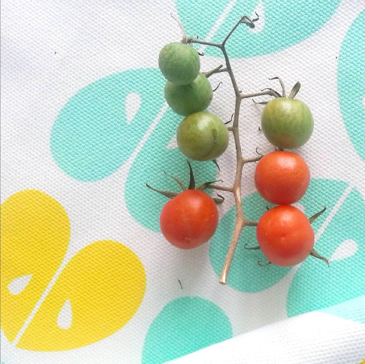 Homegrown tomatoes looking fresh on an iSpy tea towel <3