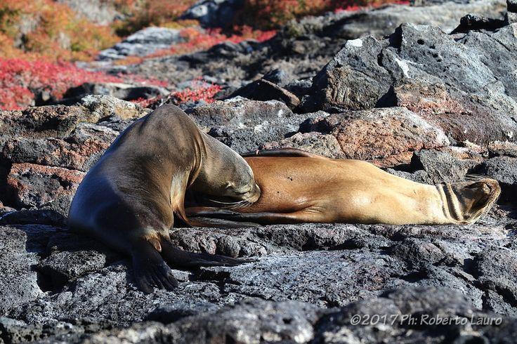 Roberto Lauro posted a photo:  Leoni Marini - Isole Galapagos - Ecuador