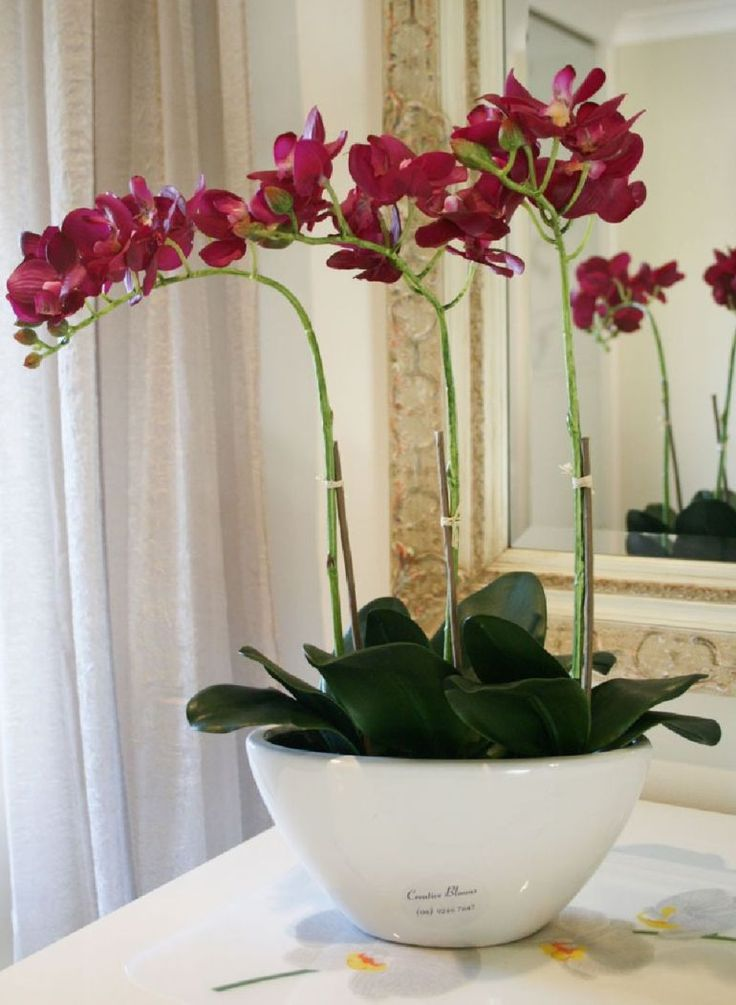 adelaparvu.com despre tratamentul pentru orhideea cu radacini putrezite si…