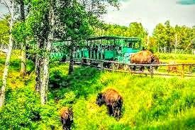 Animaux des Prairies dans les  Sentiers de la Nature au Zoo de St-Félicien