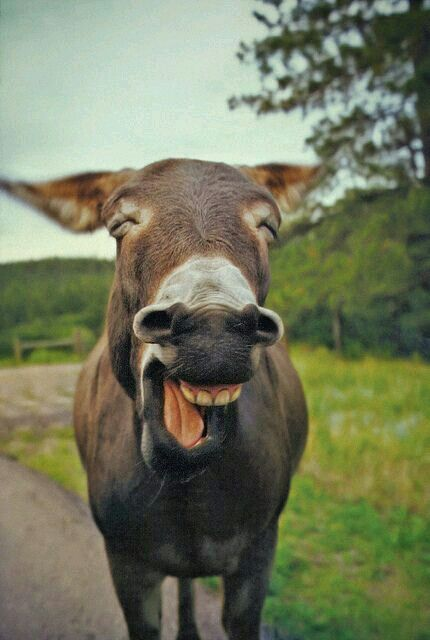 Popolare 137 migliori immagini Per ridere un po' su Pinterest | Sorriso  NA54