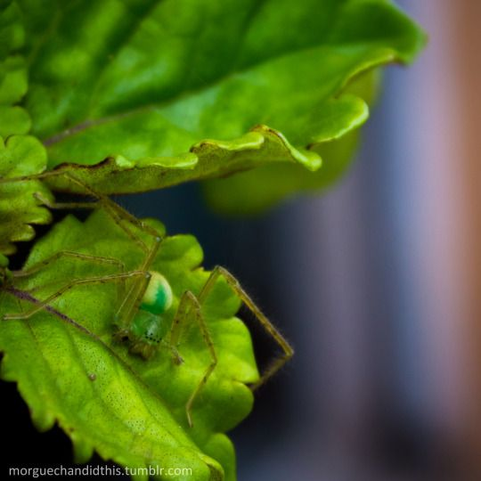 """When you grab your new Money plant (a type of succulent) to add it to your garden and discover this """"little"""" guy/lady chilling under one of the leaves. It's cool - I'll let it chill"""