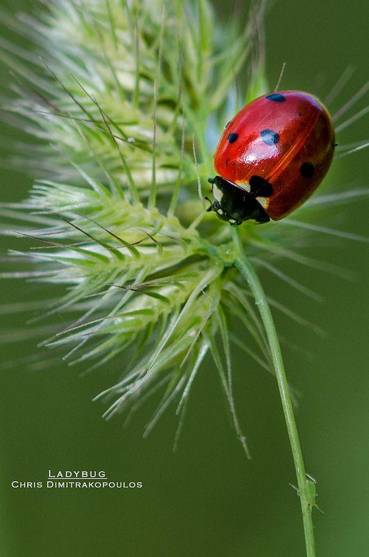 Ladybug & aphid by s1nano**