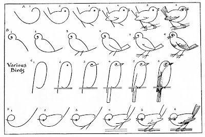 Dessiner un oiseau