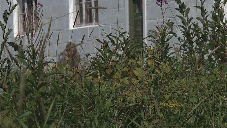 Hästhov, kanske vårens gladaste blomma!  I Örtskolans första episod berättar Alexandra De Paoli om hästhovens många användningsområden.