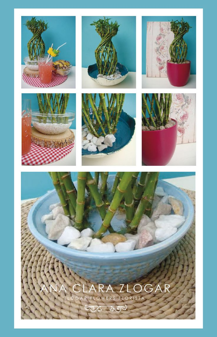 What do the colors of ribbon symbolize on lucky bamboo ehow - Lucky Bamboo