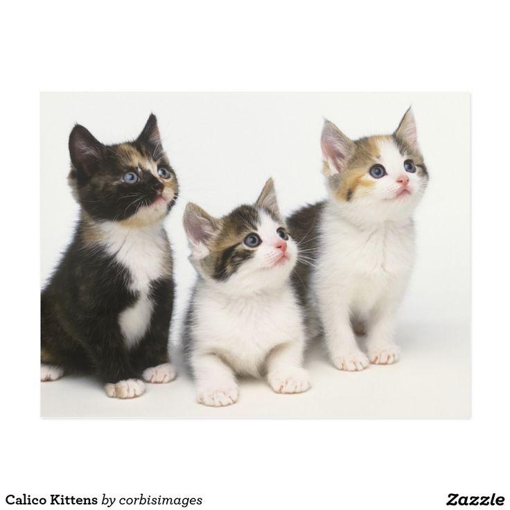 Berühmt Kätzchen Farbseite Fotos - Beispiel Wiederaufnahme Vorlagen ...