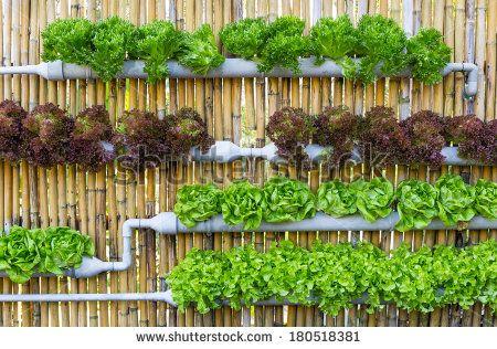 vertical garden vegetables - Google zoeken