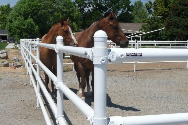 Image Result For Pvc Pipe Fence Back Yard Barn Horse