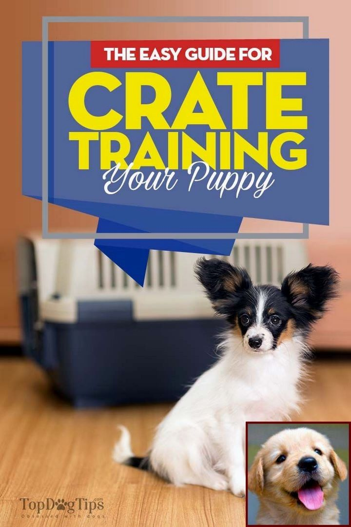 Dog Behavior Rabies And Clicker Training Dog Not To Chase Cat