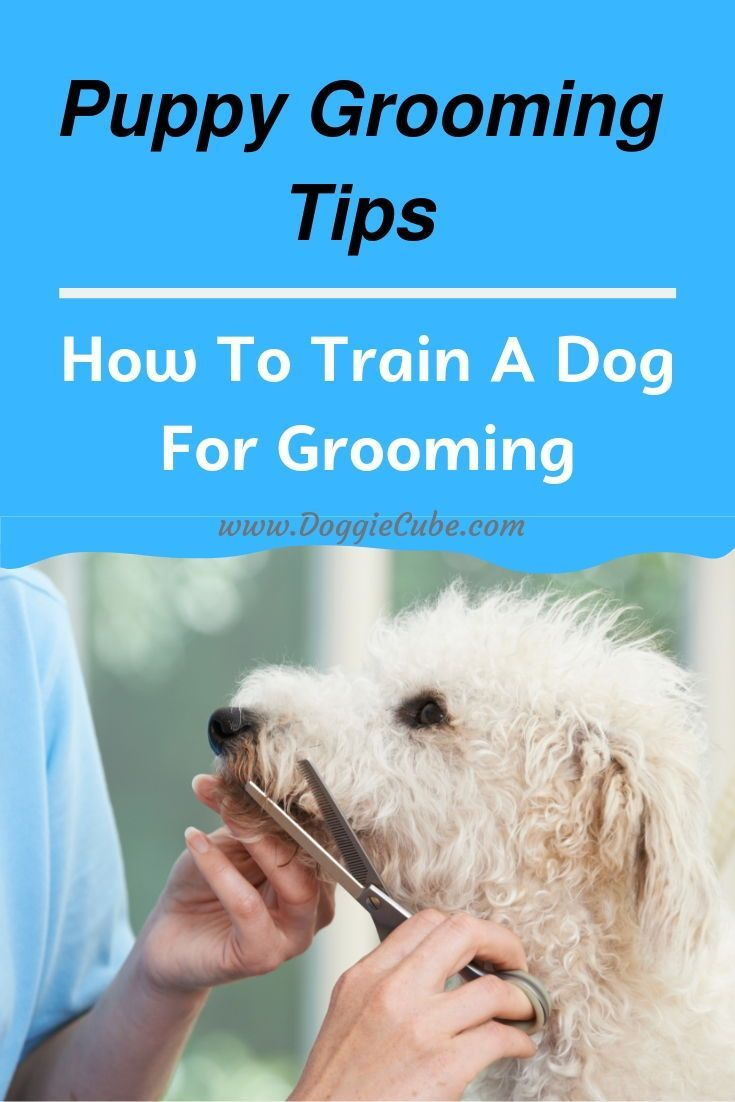 Dog Grooming Need Not Be A Struggle If You Have Prepared Your Dog