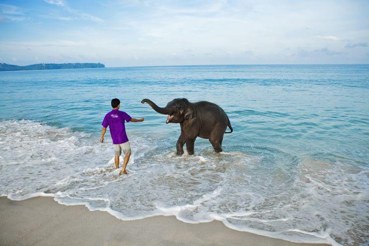 Elephant experience at Angsana Laguna Phuket, Thailand