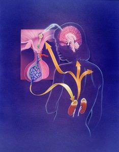 corticotrophin-releasing hormone