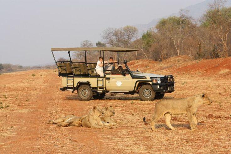 Game Drive in the Lower Zambezi National park with Royal Zambezi Lodge