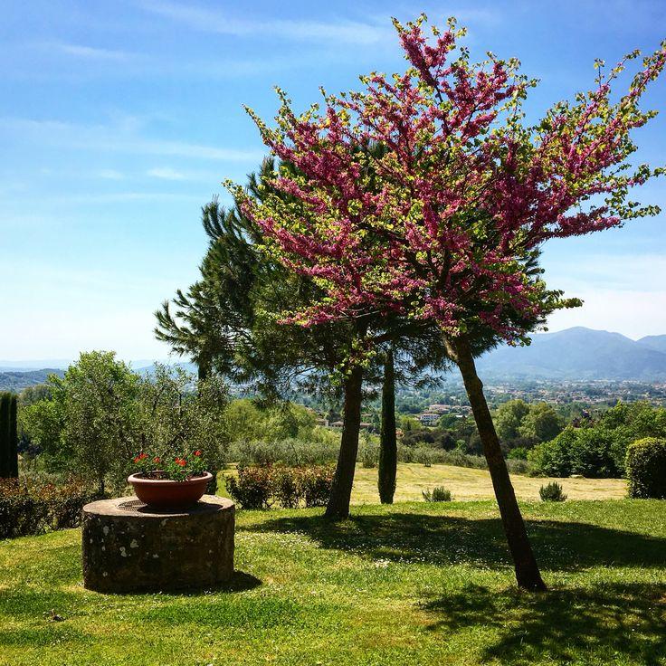 Beautiful spring morning in Tuscany