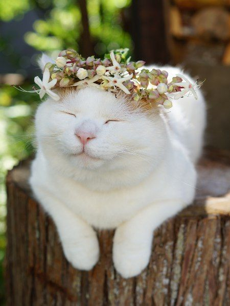 mycountryliving:  (via Pin by Kim on Here Kitty, Kitty!   Pinterest)
