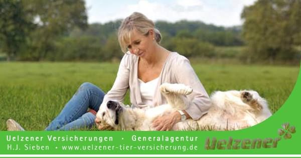 Wenn aus Spiel plötzlich Ernst wird Hunde-Haftpflicht Einfach Glück im Unglück http://www.versicherung-hund-katze-pferd.de/hunde-haftpflicht.php