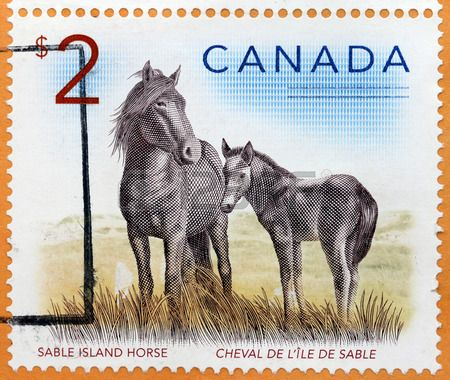 Sable Island Horse - a type of small feral horse found on Sable Island, an…