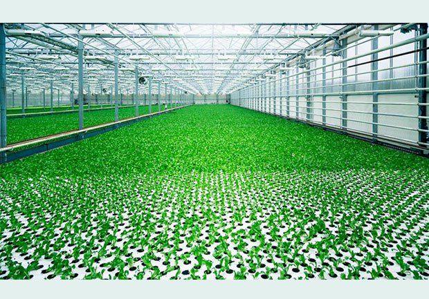 Yeni tarımsal teknoloji; LED, çok katmanlı raf sistemi ve tam otomasyonu bir araya getiriyor. Fujitsu Limited ve Fujitsu Kyushu Systems Limited; tarımsal bir Bilgi ve İletişim Teknolojisi (ICT) sis…