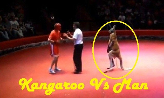 Howley.in http://howley.in/noob-central/funny-man-vs-kangaroo-fight-ever-seen-in-history/ #Funny #FunnyVideo #Kangaroo #Man #Fight #Hilarious #Howley Kangaroo Vs Man Hilarious Boxing Match Video Video Source:https://www.youtube.com/watch?v=APJgO0Mlc64