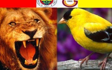 Galatasaray 2-1Fenerbahçe Maçı Golleri İzle
