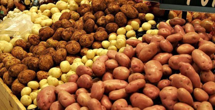 Úroda brambor i kukuřice bude nižší než vloni