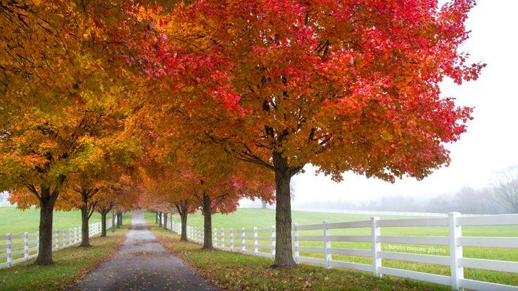 Take a fall foliage tour through Maryland's parks.