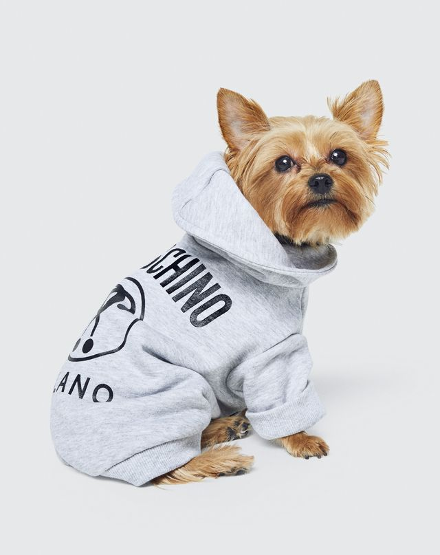 Puppy Love Moschino And H M Come Together To Create A Collection
