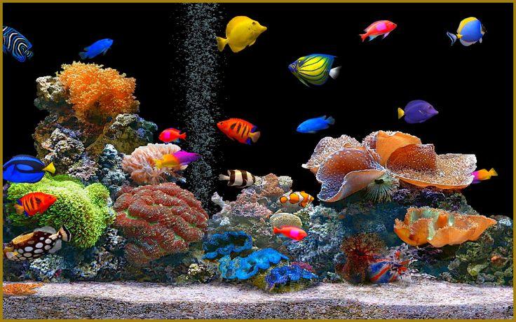 Healthy, balanced, salt water aquarium.