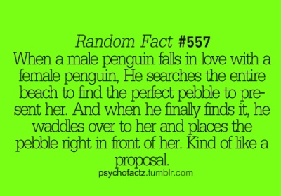 this is why penguins are my favorite animals <3
