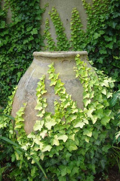 interesting how this looks like it could be a textured painting with the ivy growing up and around the flat pot.