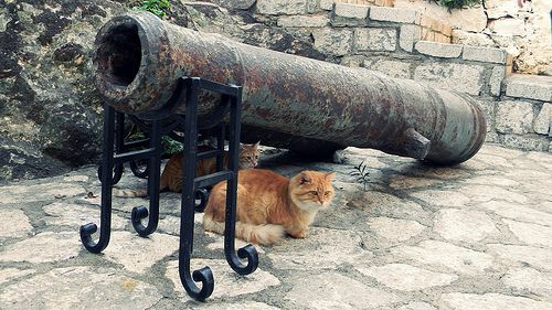 Gatti sotto un cannone turco