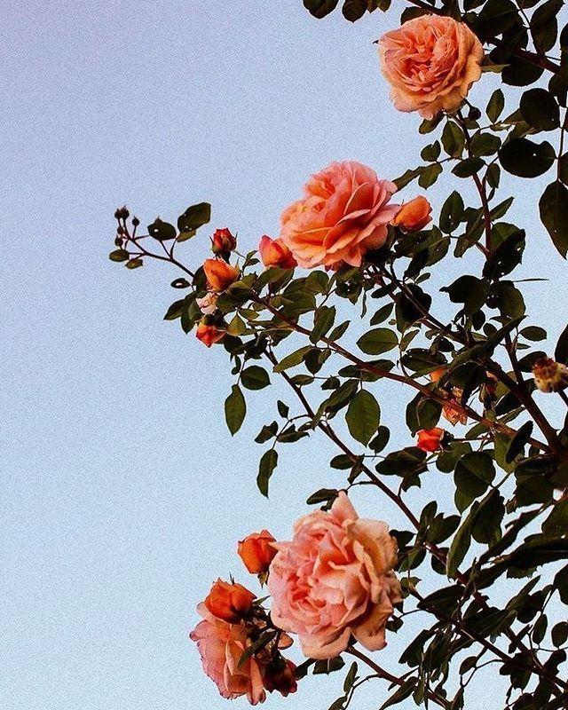 Beautiful Flower Aesthetic Flower Iphone Wallpaper
