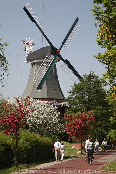 Windmühle Flügel in Greetsiel Frühling Foto über Bäumenblüte, Ostfriesland Urlaub Spaziergang