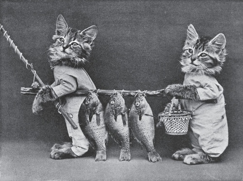 Louis Wain (1860-1939) or Harry Whittier Frees (1879-1953)  Anthropomorphised Animal Photography