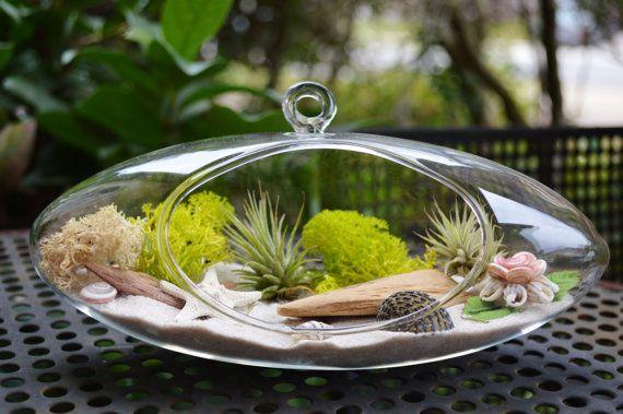 Beach Terrarium with Airplants  Moss  Sea by BeachCottageBoutique, $38.00